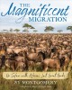 The magnificent migration : on safari with Africa's last great herds
