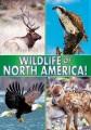 Wildlife of North America!.