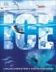 Ice : chilling stories from a disappearing world