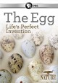 The egg : life