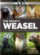 Nature. The mighty weasel