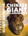 Chinese giant salamanders