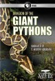 Invasion of the giant pythons.