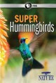 Nature. Super hummingbirds