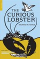 The curious lobster