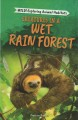 Creatures in a wet rain forest