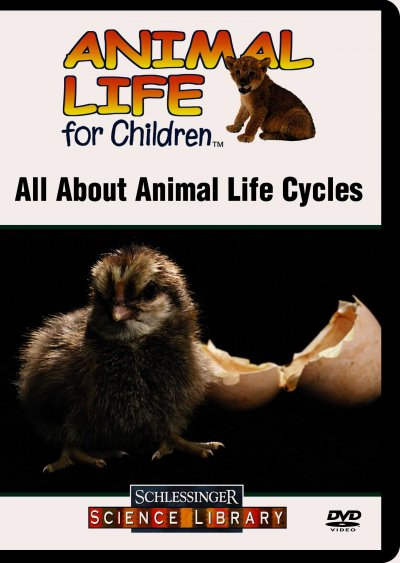 All about animal life cycles