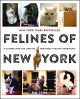 FELINES OF NEW YORK : A GLIMPSE INTO THE LIVES OF NEW YORK