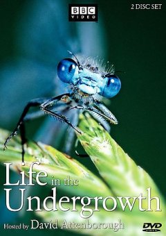 Cover image for Life in the undergrowth