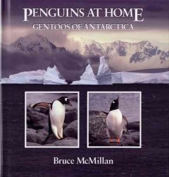 Penguins at Home