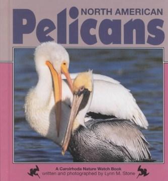 North American Pelicans