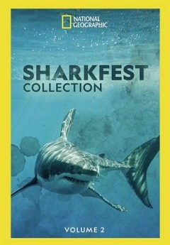 Sharkfest Collection