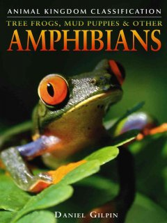 Tree Frogs, Mud Puppies, & Other Amphibians