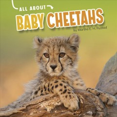 All About Baby Cheetahs
