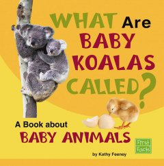 What Are Baby Koalas Called?