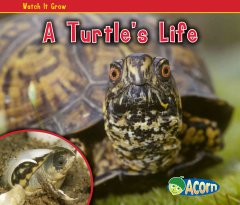 A Turtle's Life