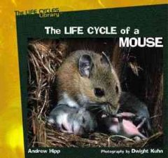The Life Cycle of A Mouse