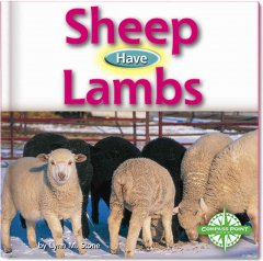 Sheep Have Lambs