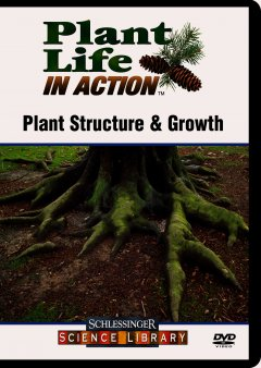 Plant Structure & Growth