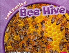Look Inside A Bee Hive