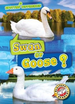 Swan or Goose?