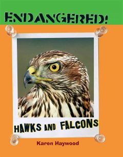 Hawks and Falcons