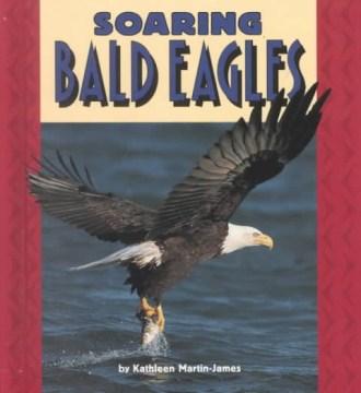 Soaring Bald Eagles