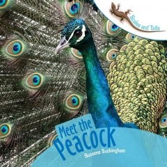 Meet the Peacock