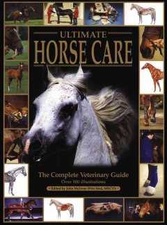 The Ultimate Horse Care