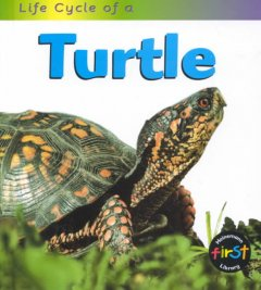 Life Cycle of A-- Turtle