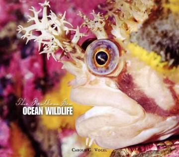 Ocean Wildlife