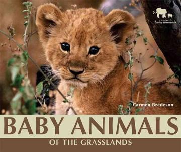 Baby Animals of the Grasslands