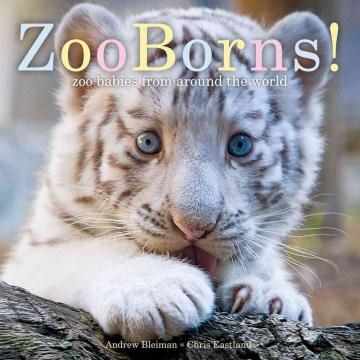 Zoo Borns!