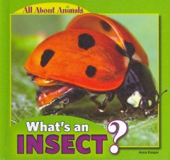 What's An Insect?