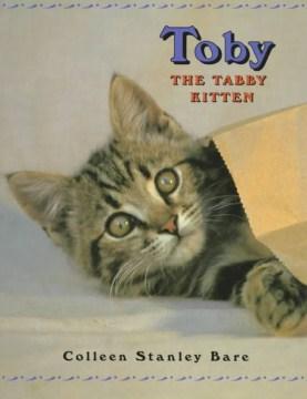 Toby The Tabby Kitten