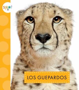 Los guepardos