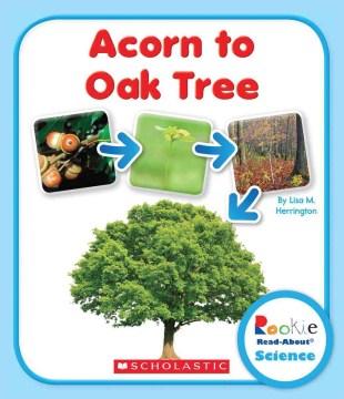 Acorn to Oak Tree