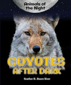Coyotes After Dark