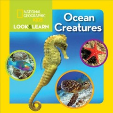 Ocean Creatures [board Book]