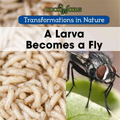 A Larva Becomes A Fly