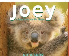 Joey - a baby koala and his mother