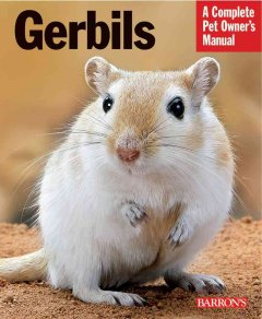 Gerbils: Everything About Purchase, Care, and Nutrition