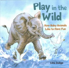 Play in the wild - how baby animals like to have fun