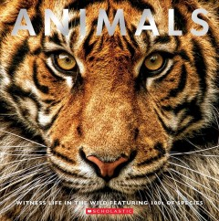 Animals - witness life in the wild featuring 1000s of species