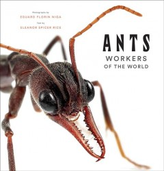 Ants - Workers of the World