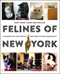 Felines of New York: a Glimpse into the Lives of New York's Feline Inhabitants