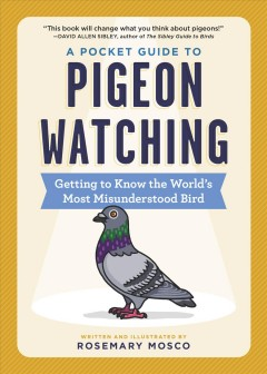 A pocket guide to pigeon watching - getting to know the world's most misunderstood bird
