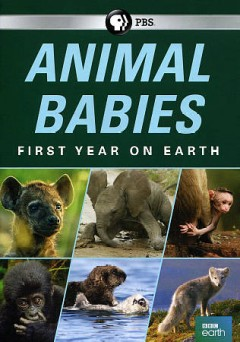 Animal Babies- First Year on Earth