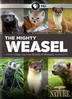 Nature- The Mighty Weasel