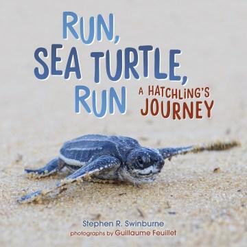 Run, sea turtle, run - a hatchling's journey